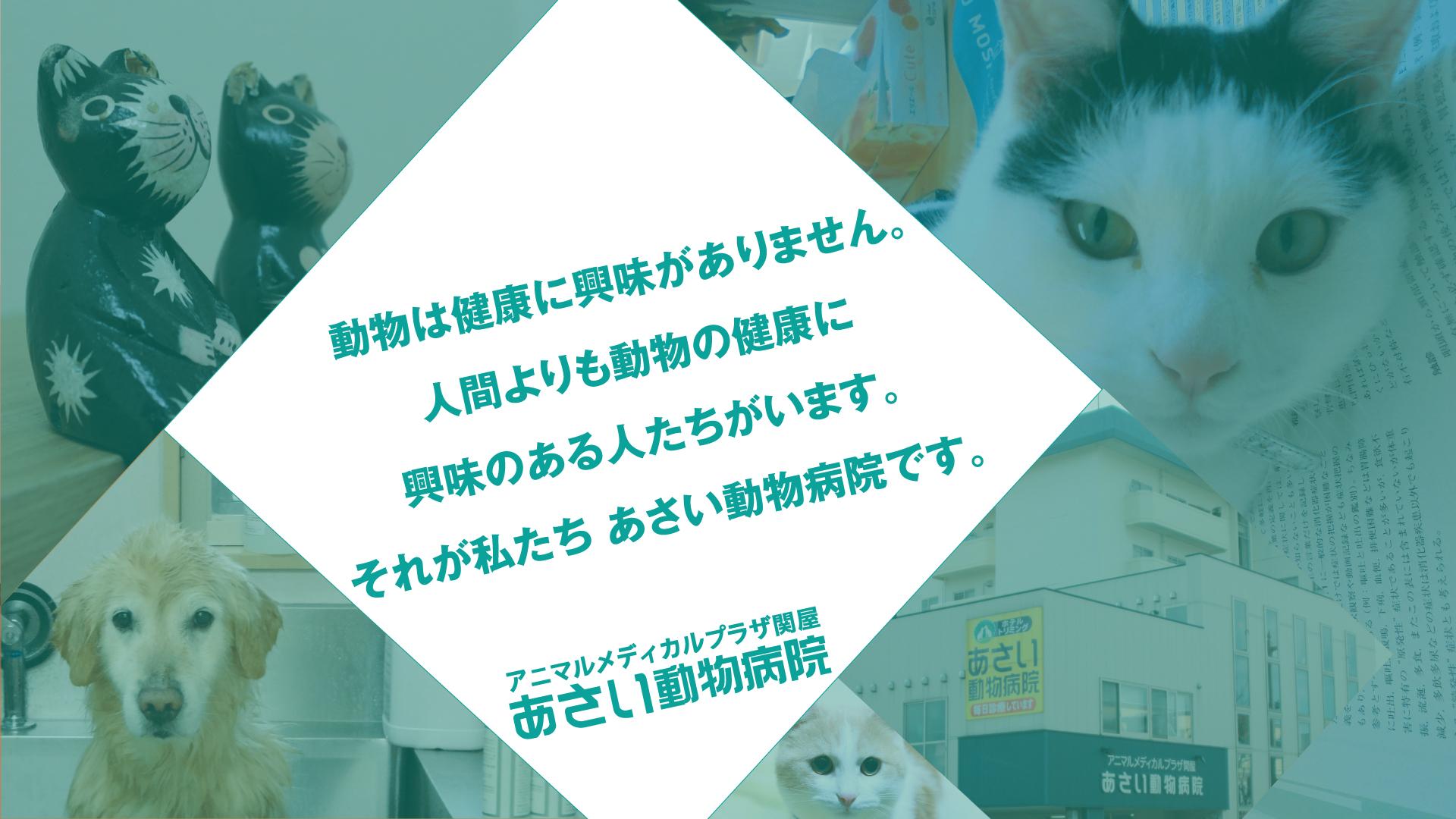 動物は健康に興味ありません。人間より動物の健康に興味のある人たちがいます。それが私たちあさい動物病院です。